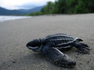 Papua New Guinea 06-07 2_compressed